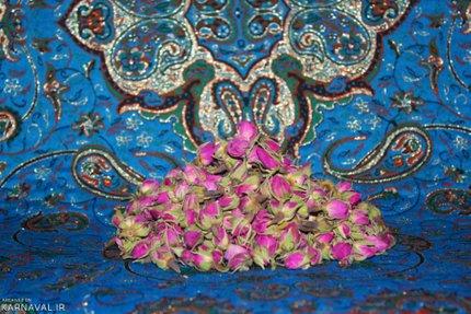 گل محمدی | Photo by : Unknown
