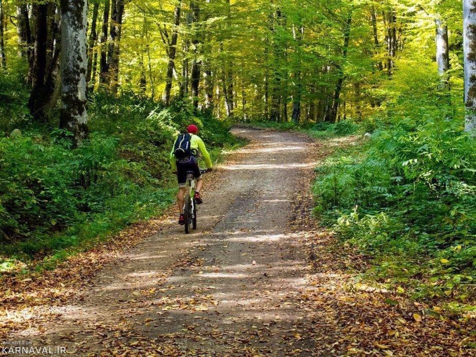 دوچرخه سواری در جنگل راش | Photo by : Unknown