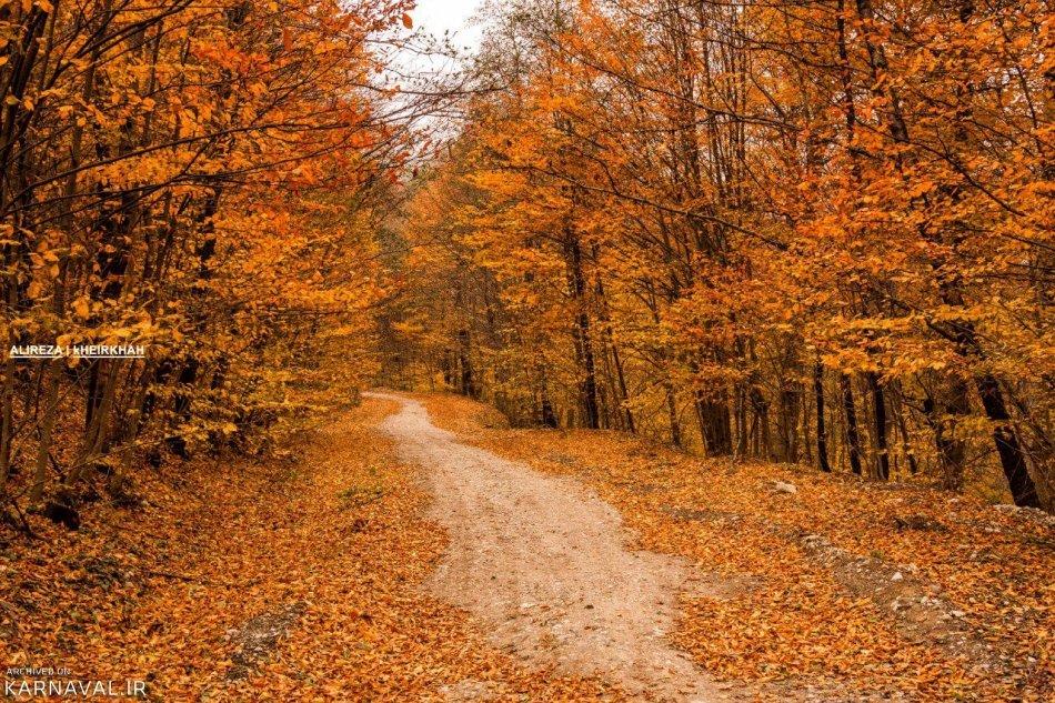 پاییز جنگل راش | Photo by : Alireza Kheirkhah