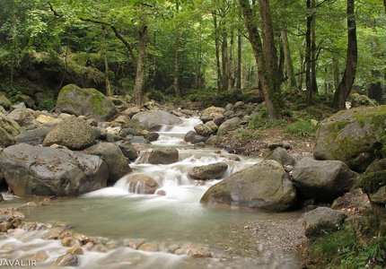 رودخانه صفارود در پارک جنگلی صفارود | Photo by : Mehrab Pourfaraj