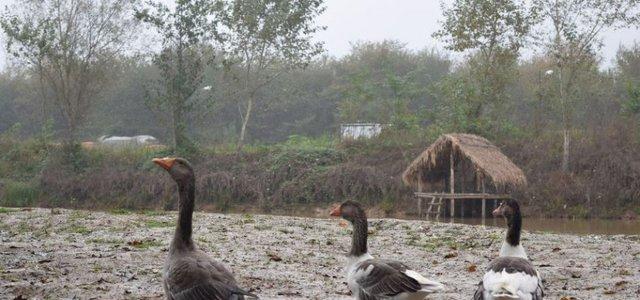 موزه میراث روستایی گیلان | Photo by : Mehdi Fazlavi