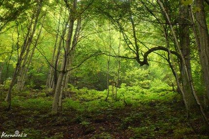 جنگل سنگده | Photo by : Zeynab Shirazi | Karnaval
