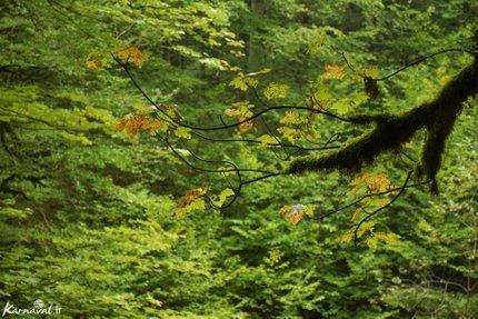 جنگل سنگده   Photo by : Zeynab Shirazi   Karnaval
