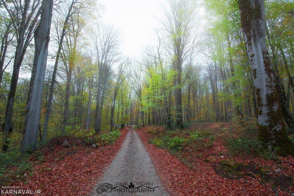 جنگل راش | Photo by : Unknown