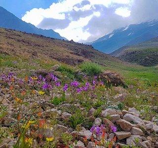 گلها و گیاهان دشت آزو | Photo by : Fahime Dezfouli | Karnaval