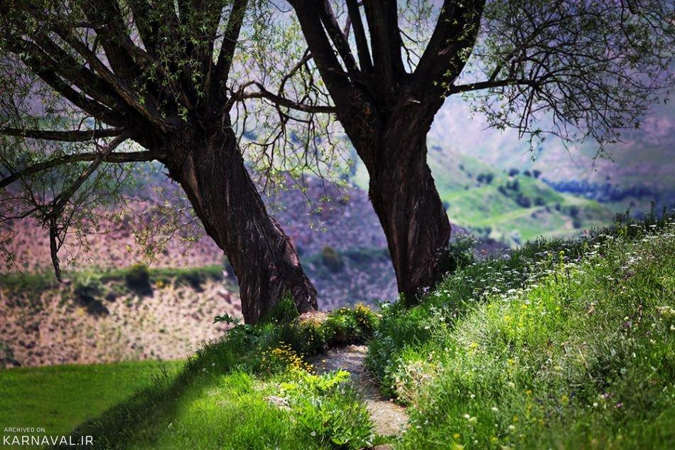درختان مسیر دشت آزو | Photo by : Seyyed Vahid Hosseini | MIZAN