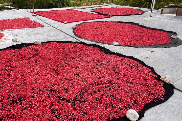 سفر پاییزی به کوچه باغهای دورک اناری | تماشای «ناردنگ» در کنار آبشار دره عشق | این روستای تاریخی یک بار جابجا شده است