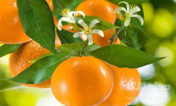 بهار نارنج چیست