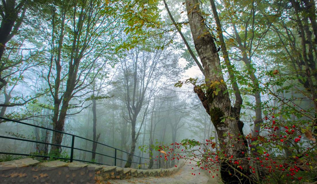 جنگل هزار پله