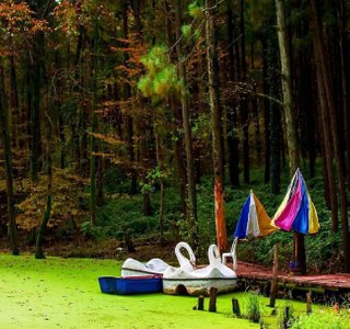 دریاچه پارک جنگلی سراوان | Photo by : Unknown