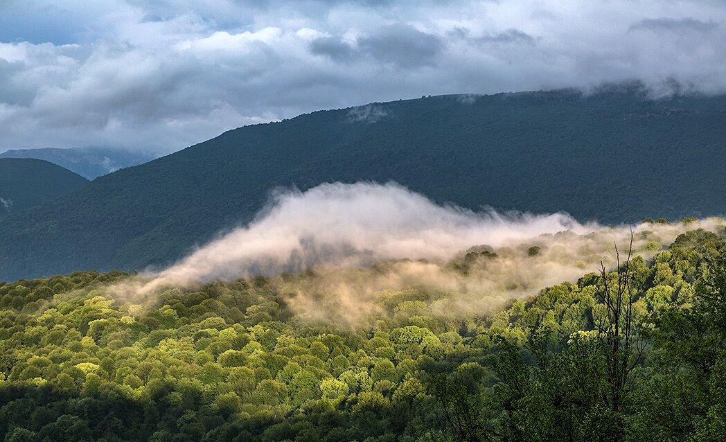 جنگلهای هیرکانی مازندران را بهتر بشناسیم