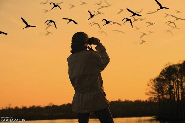 پرنده نگری | Photo by : Unknown