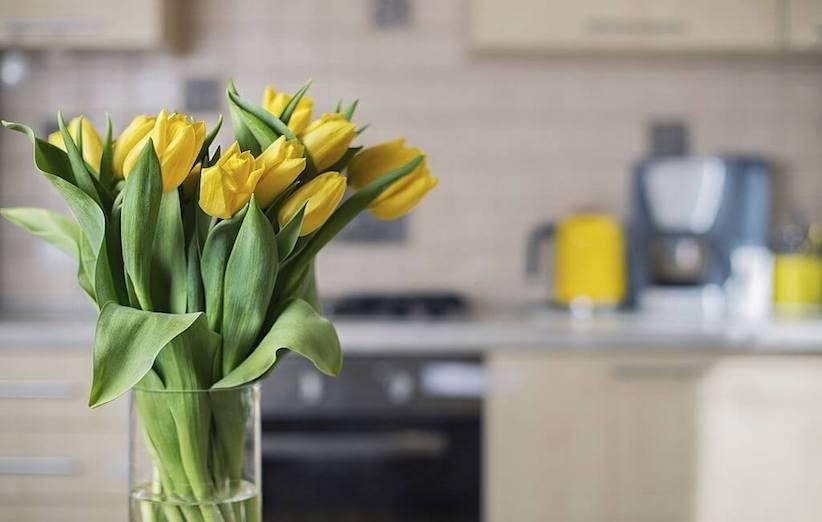 نگهداری از گلهای تازه